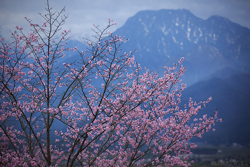 Sakura and Mt.Ariakeyama