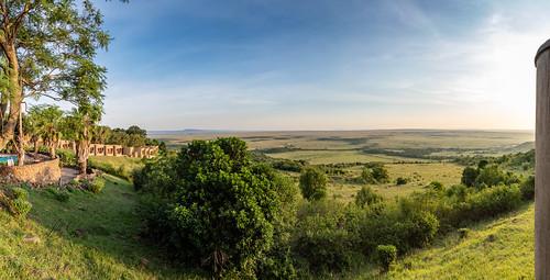africa kenya vantagetravel safari travel 201902279l8a2834pano location tanzania transmara riftvalleyprovince mara serena lodge national reserve park savanna plains grass sunrise dawn explore explored