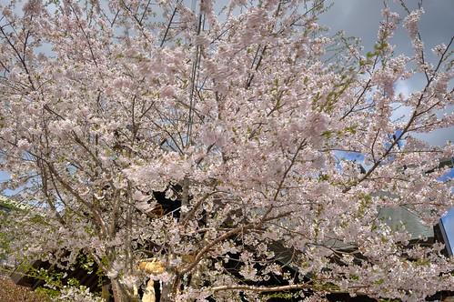 02-05-2019 Ryugu Jinjya Shrine, Otaru (11)