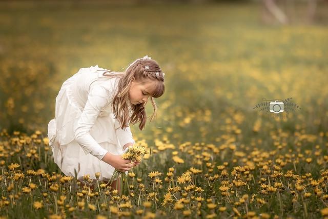 The dandelion meadow