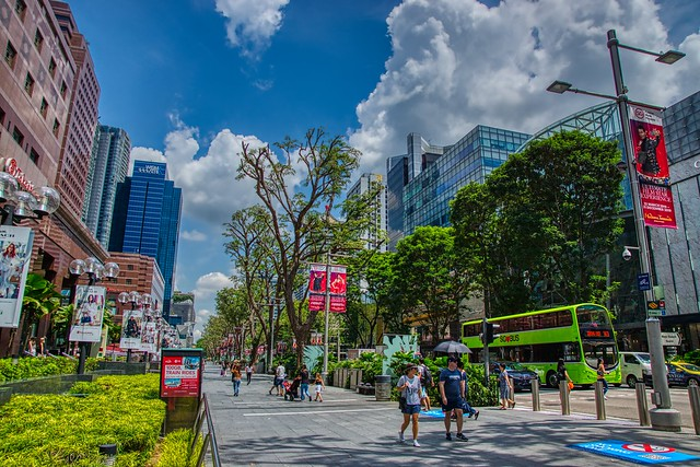 Orchard road with extremely cut back trees in Singapore