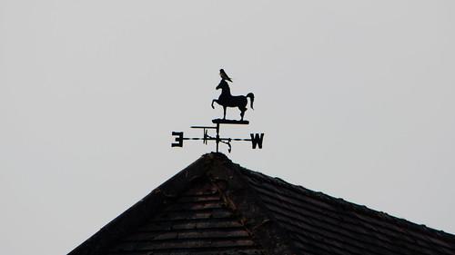 First swallow, resting, Castlecroft