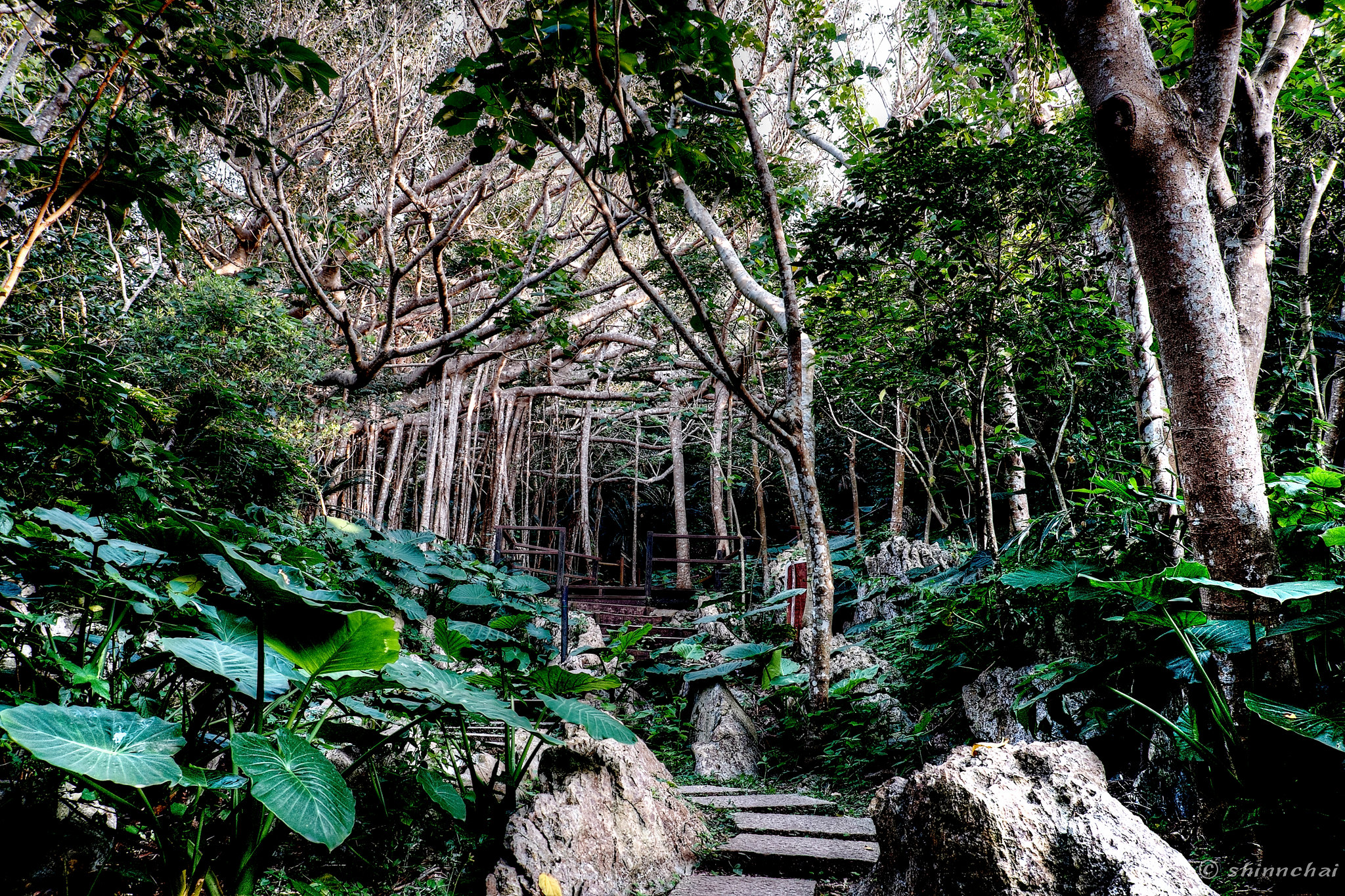ズームレンズ 単焦点レンズ 比較画像 画質 沖縄 ガジュマル