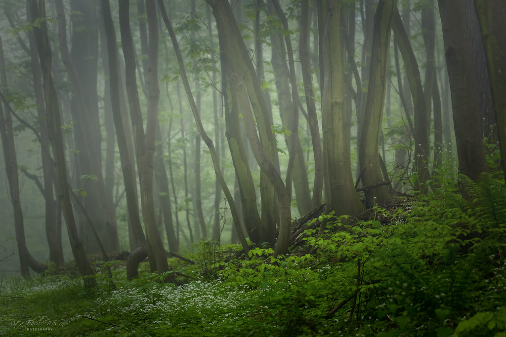 May forest