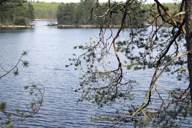 Järvimaisema patikointipolun varrella Teijon kansallispuistossa
