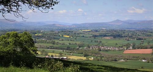 Monmouth (Dickie-Dai-Do)