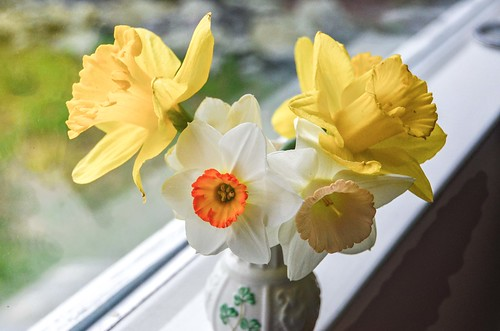 Mixed Daffodil Bouquet