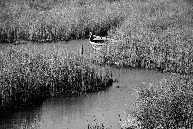 A old boat in the salt marsh - II