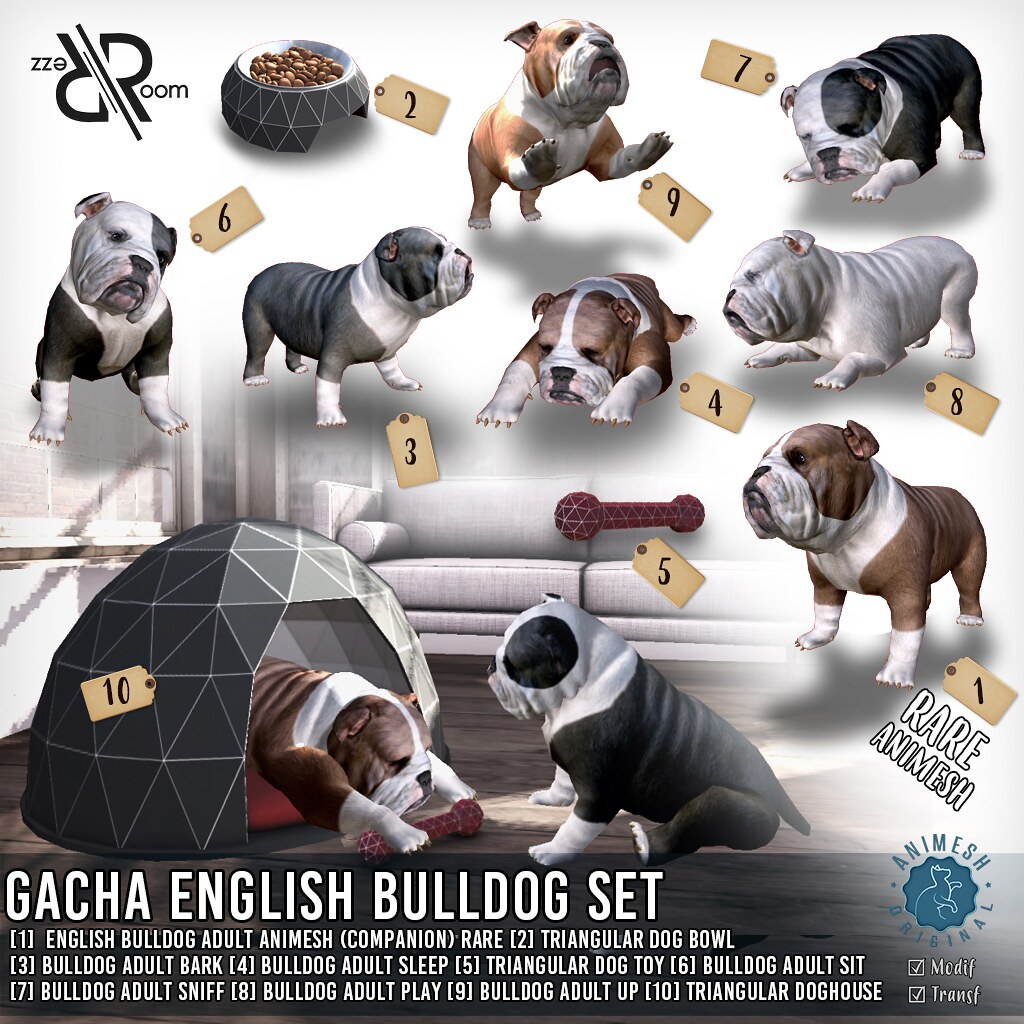 [Rezz Room] English Bulldog Adult  Gacha Set
