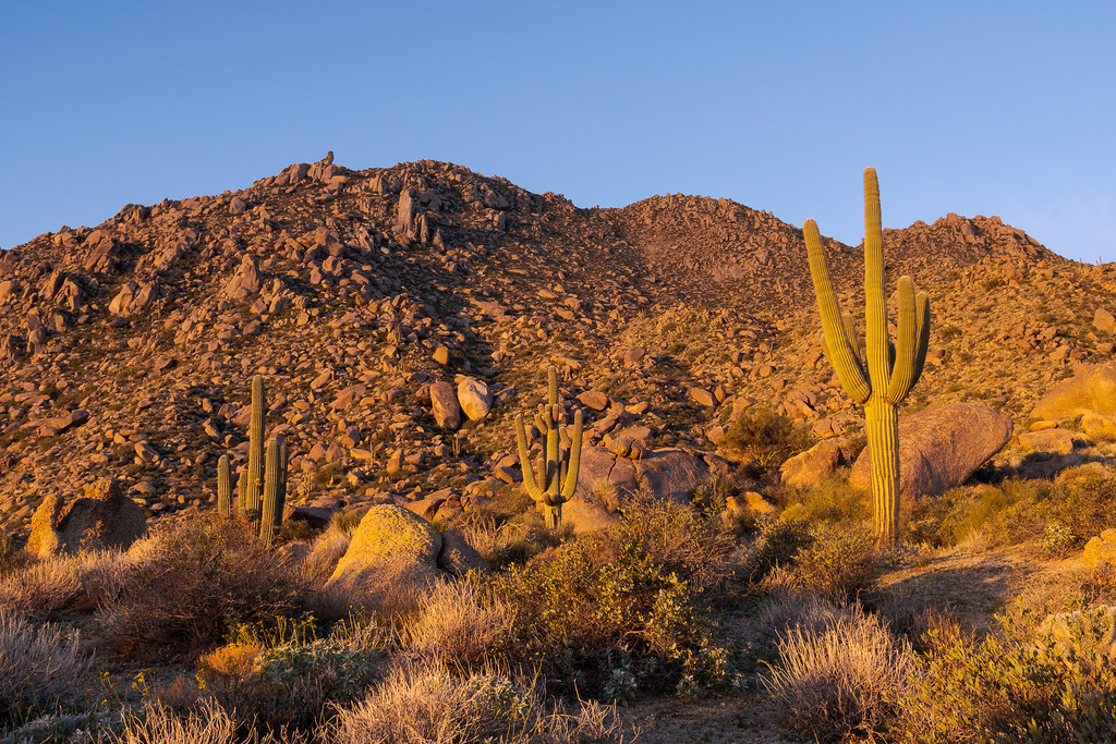 A view at sunrise of three saguaros growing atop the Marcus Landslide in McDowell Sonoran Preserve in Scottsdale, Arizona