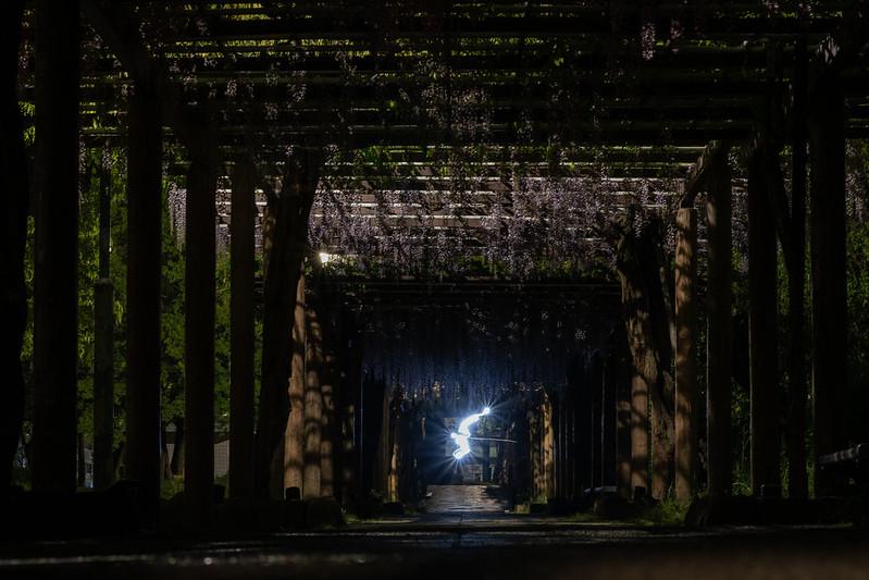 夜の藤の回廊