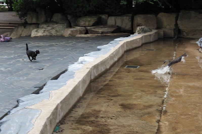 17 東池袋中央公園の猫だまり