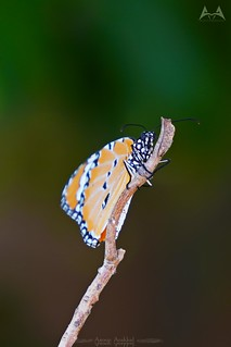 A6400 Butterfly
