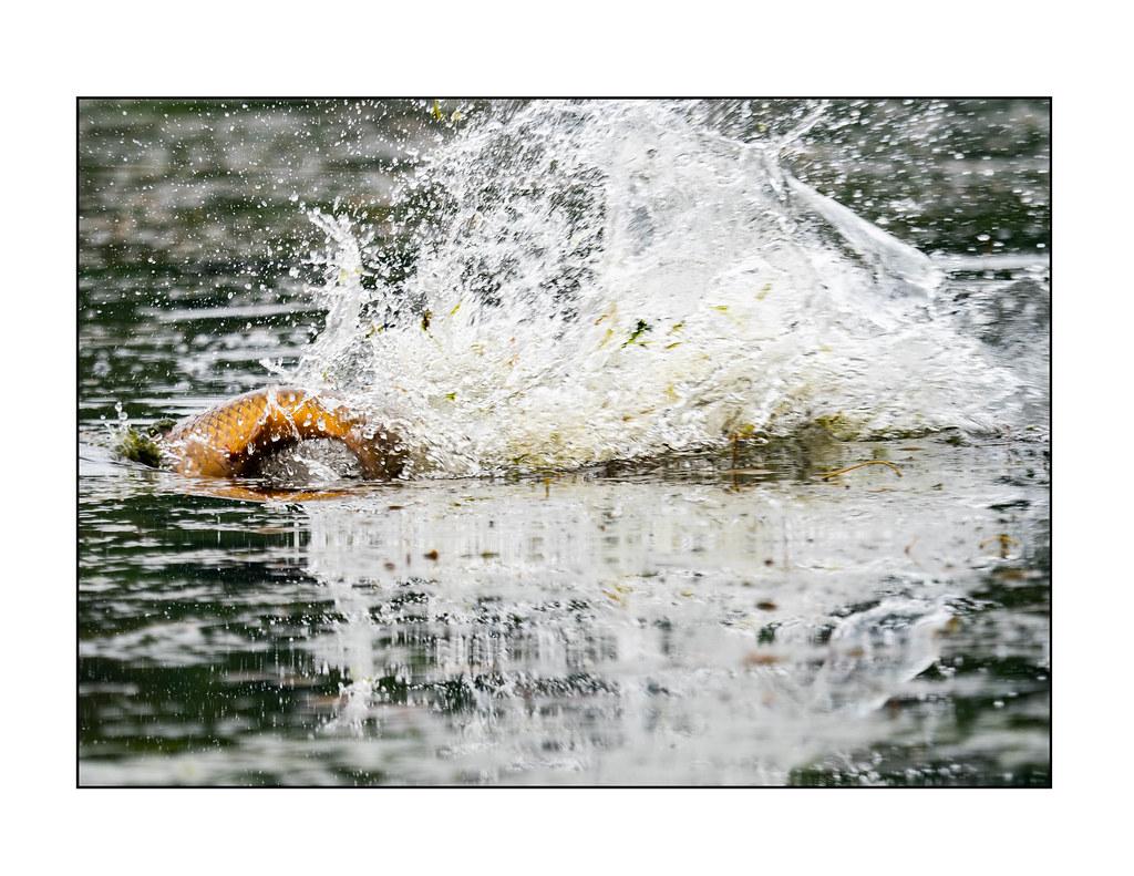 il salto della carpa | ALBERTO ADAMI | Flickr