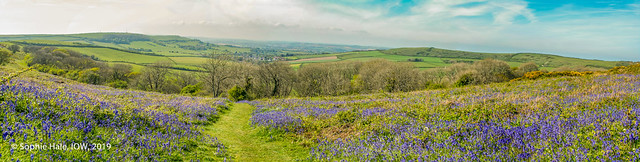 Bluebells with a view