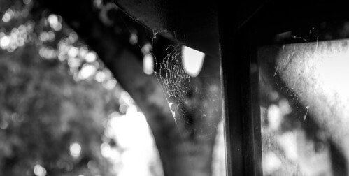 Spidey was absent | by Toni Moisio