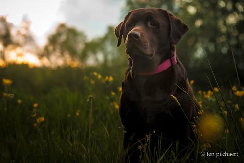 lizzy, queen of the buttercup jungle | by fen pilchaert