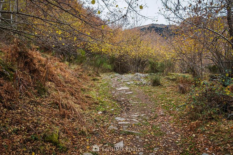 Un claro en la parte alta del Bosc de Carlac