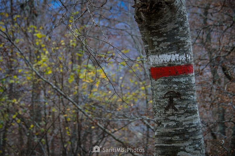 Un indalo grabado en un árbol del Bosc de Carlac