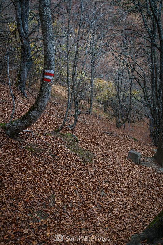 Árbol con doble marca de sendero GR en el Bosc de Carlac