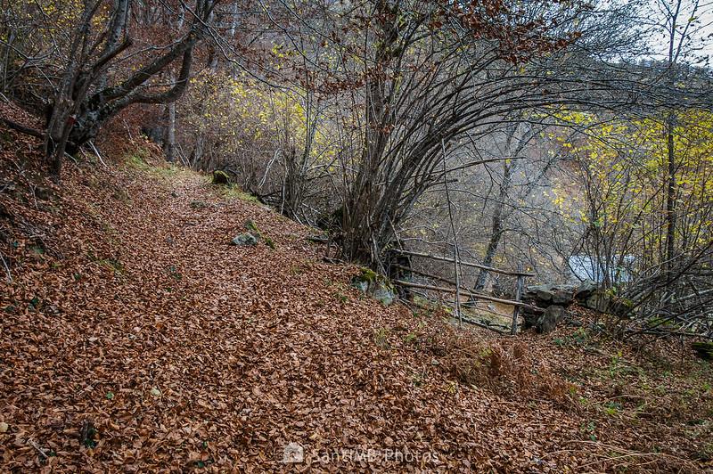 El Bosc de Carlac a la altura de Es Bòrdes de Carlac