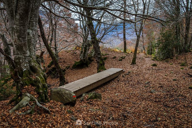 Pasarela de madera en el Camin de Carlac
