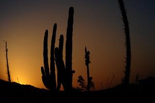 Baja California Desert, Mexico