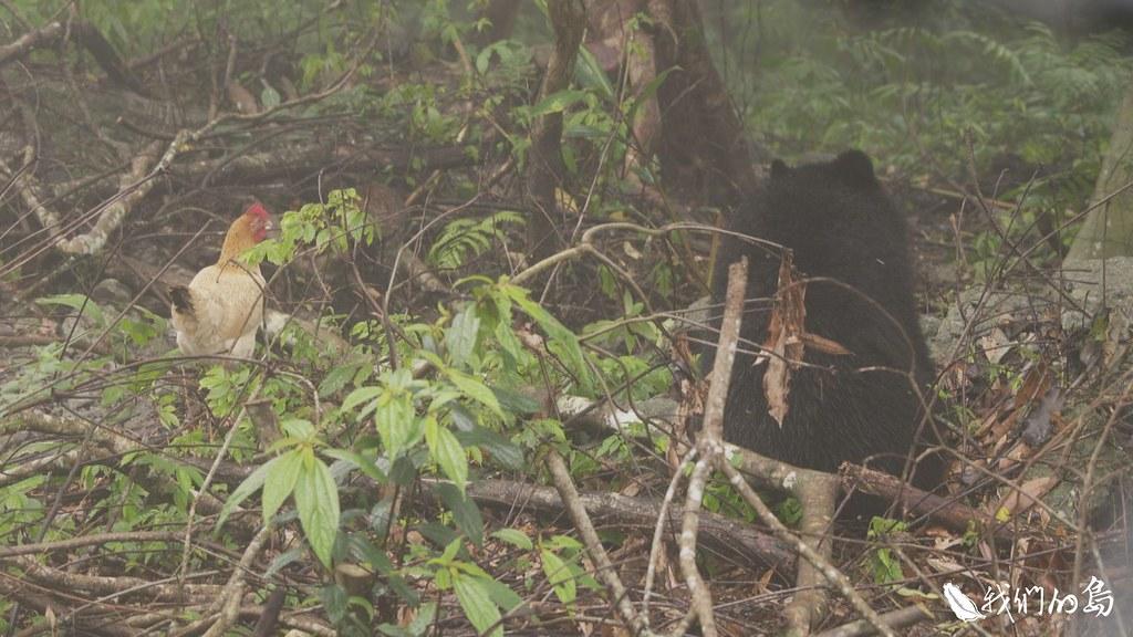 小熊與牠的好麻雞。