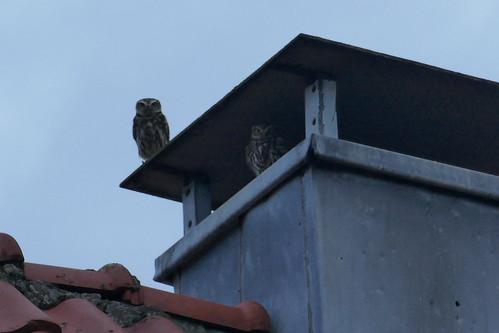 Samen op de schoorsteen.