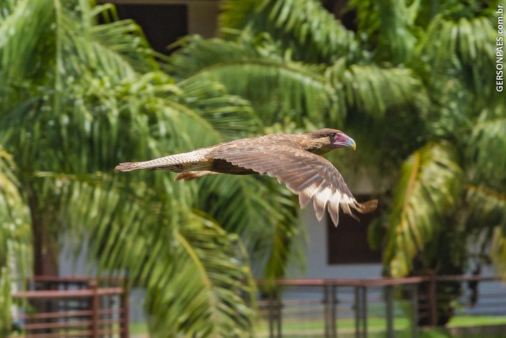Pantanal, MT