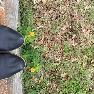 Bench Monday: Lantana Overlook