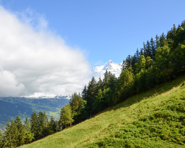 Inclinación de los bosques por donde subía el Jungfraubahn
