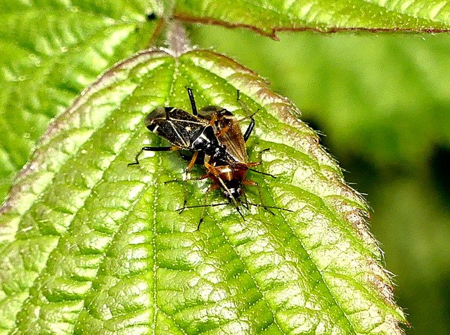 Bug on Bug (1) 6.5.19