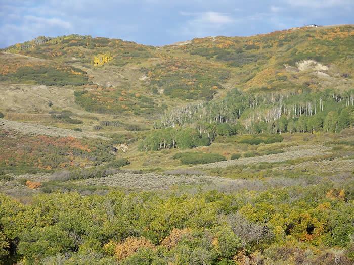 Colorado Elk Horseback Hunt & Mule Deer - Antlers & Anglers