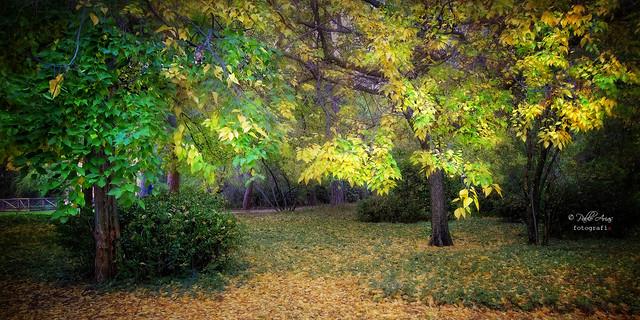 (115/19) Recuerdos de otoños pasados