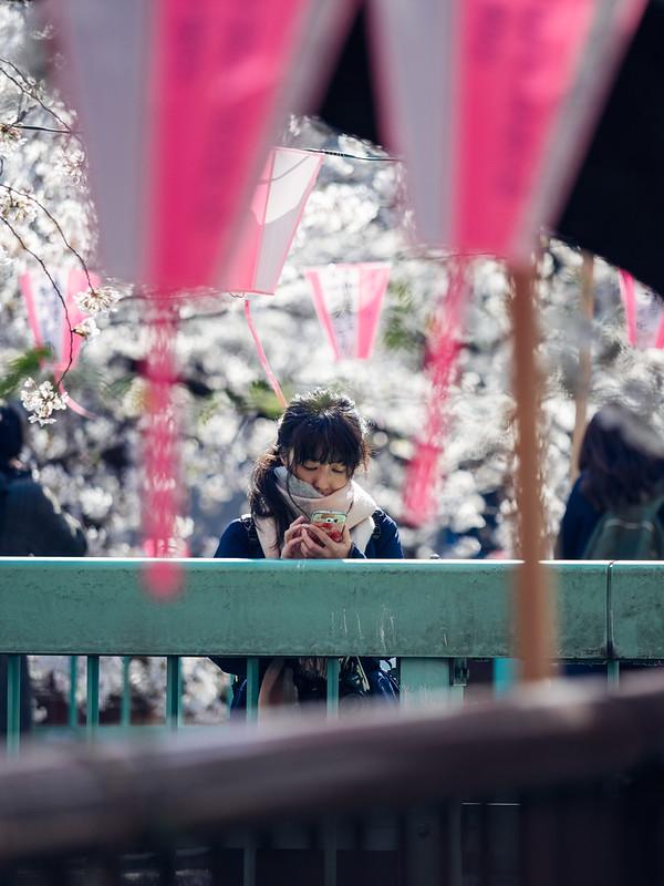 中目黑|櫻花 Sakura