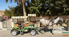 carro de caballo medio de transporte Tozeur Tunez 05