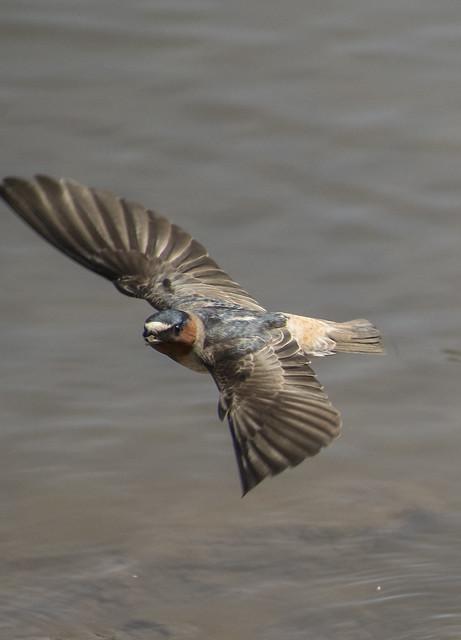 Muddy beak