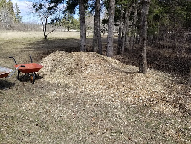 20190509.,cleanup.mulching.woodchip.pile.used