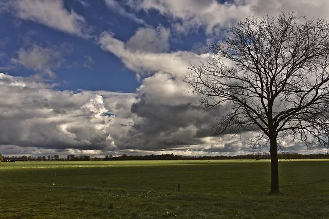 Frysian landscape near Rolpaal - Fryslân ... (6453)