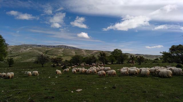 Arsaldua-Andia