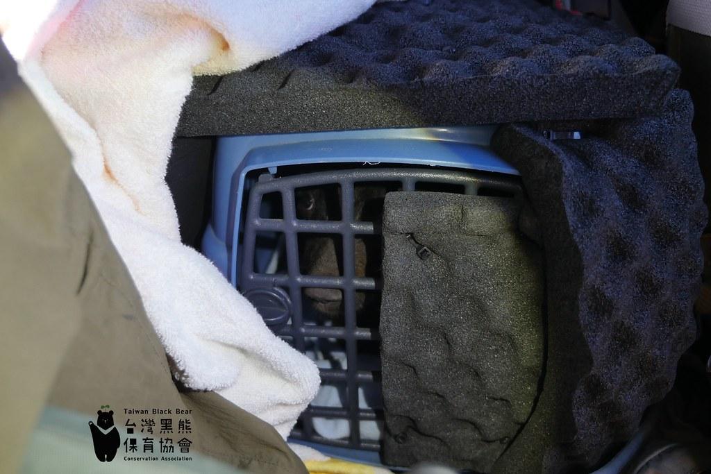 動物醫療照護隨個體狀況而有不同考量。 去年8月,小熊僅五公斤,使用塑膠運輸籠運送,外覆隔音泡棉,並由鋼瓶供應氧氣。圖片提供:台灣黑熊保育協會