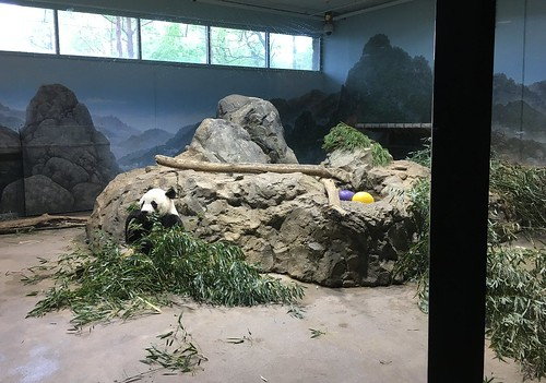 Panda Bei Bei