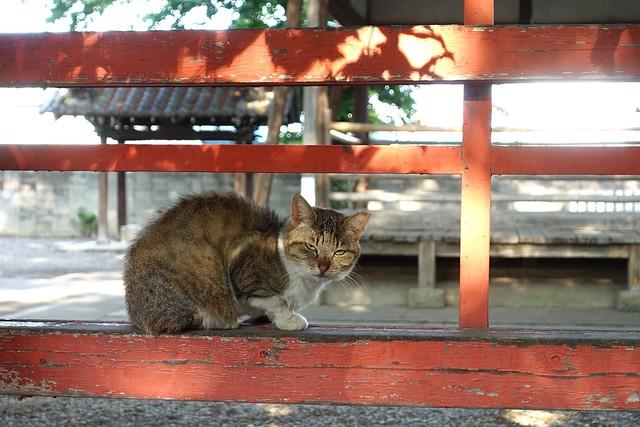 Today's Cat@2019-05-10