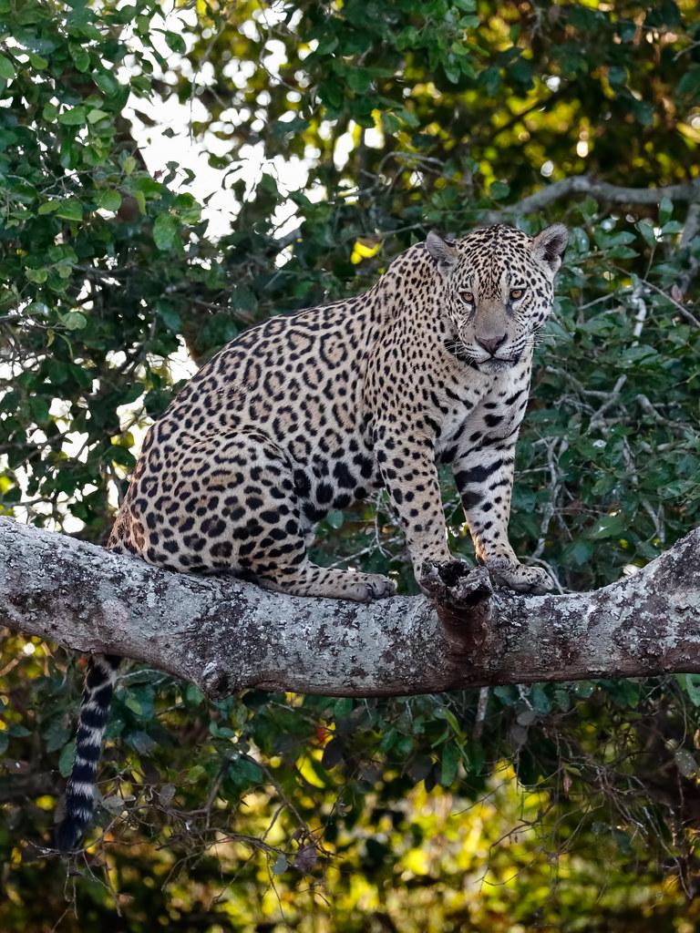 Pantanal_3052