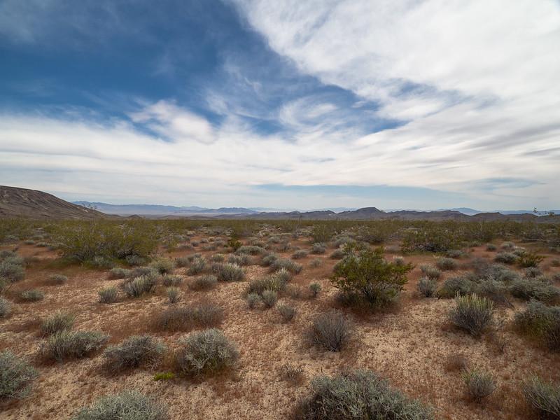 Весна в пустыне Мохаве -