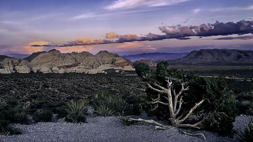 2019 america iphone may redrockcanyon southwest nature landscape junipertree sunset