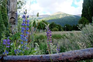 Flores de Bariloche