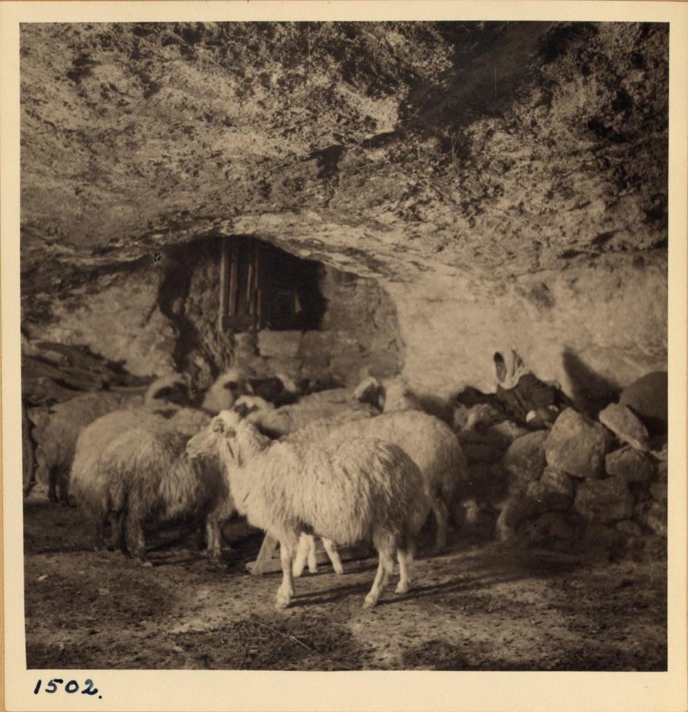 23. Пастух и овцы в пещере. Снято в Бейт-Сахуре вечером 3 декабря и утром 4 декабря