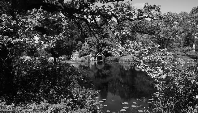 Bargany gardens.   (IMG_2853)